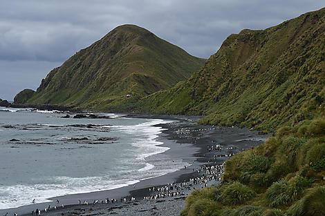 Sandy Bay, île Macquarie