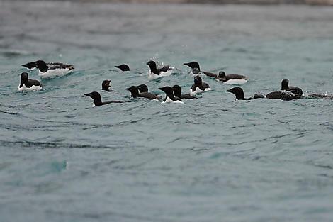 Isbukta, Spitzbergen