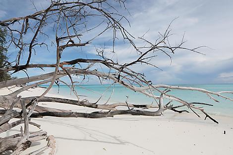 Juan de Nova, Scattered Islands