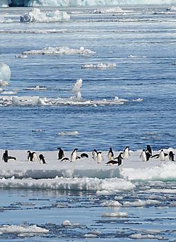 Région de la mer de Ross
